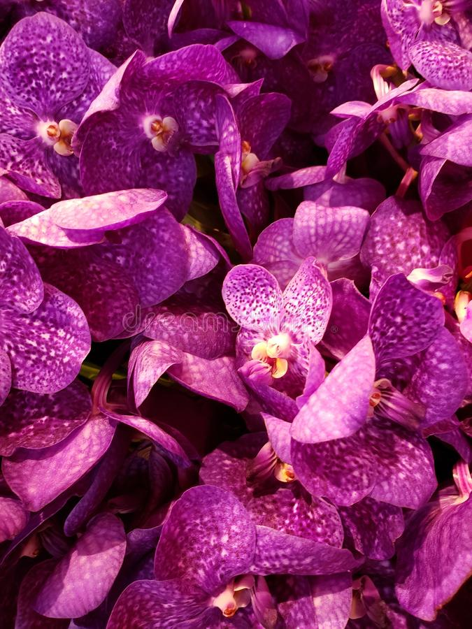 purpurrote Orchideenblume in einem Blumengesteck, in einem Hintergrund und in einer Beschaffenheit lizenzfreies stockbild