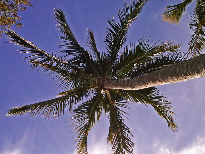 Purpurrote Palme lizenzfreies stockbild