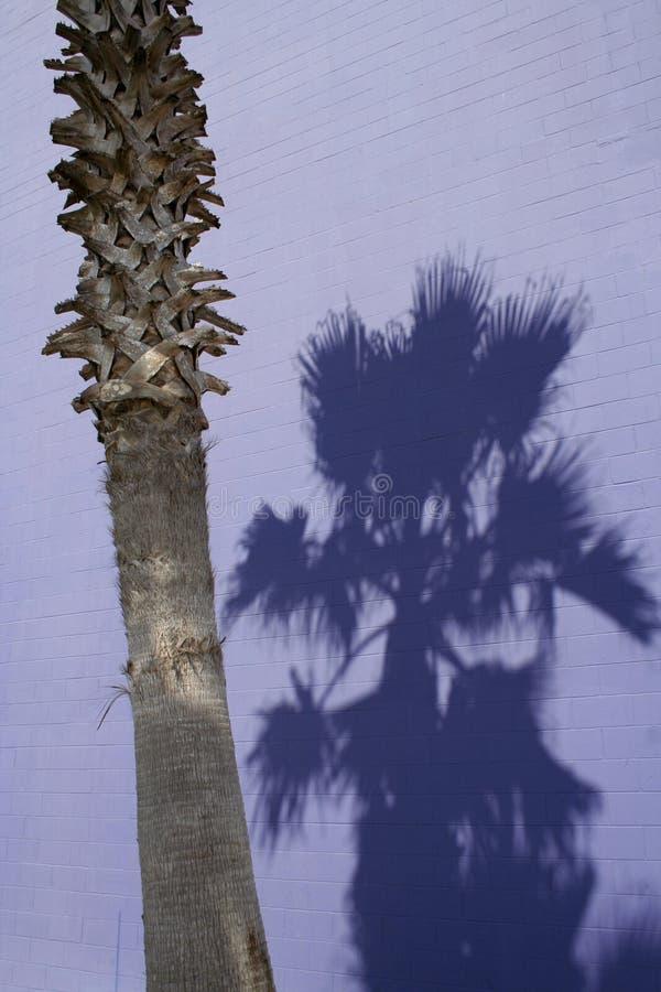Purpurrote Palme stockfotos
