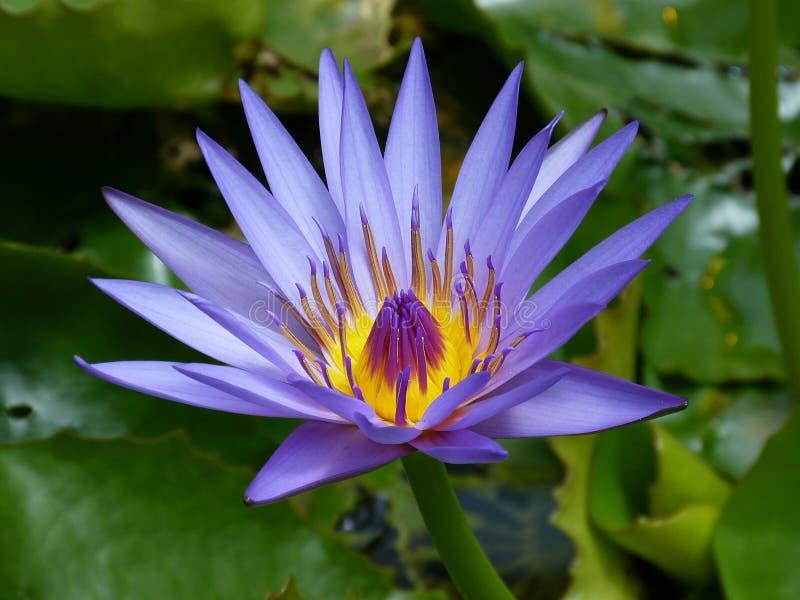 Purpurrote Petaled Blume nahe grüner Blatt-Anlage lizenzfreies stockfoto
