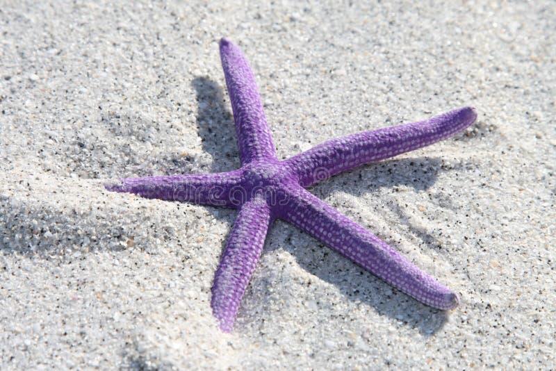 Purpurrote Starfish lizenzfreie stockfotos