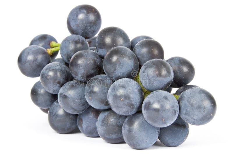Purpurrote Trauben getrennt auf Weiß lizenzfreies stockbild