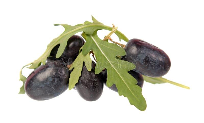 Purpurrote Traubenbeeren und frische grüne Blätter von Arugula Rucola oder von Rocket-Salat lokalisiert auf weißem Hintergrund stockfotos