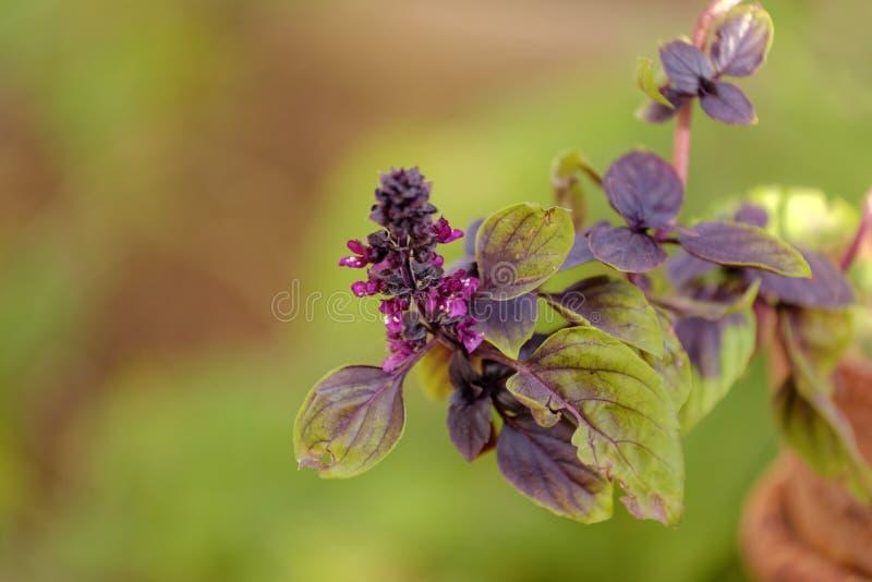 Purpurrote tropische Blumen stockfoto