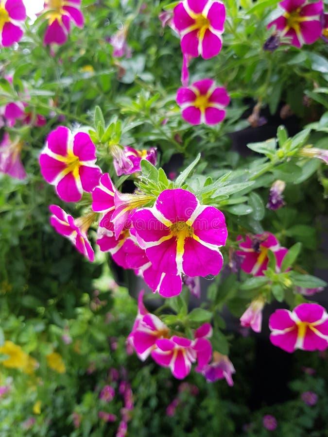 Purpurrote und gelbe Blumen stockfotografie
