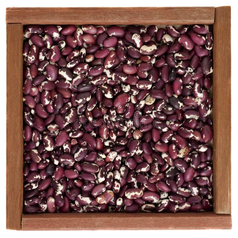 Purpurrote und weiße Anasazi Bohnen in einem hölzernen Kasten lizenzfreie stockfotos