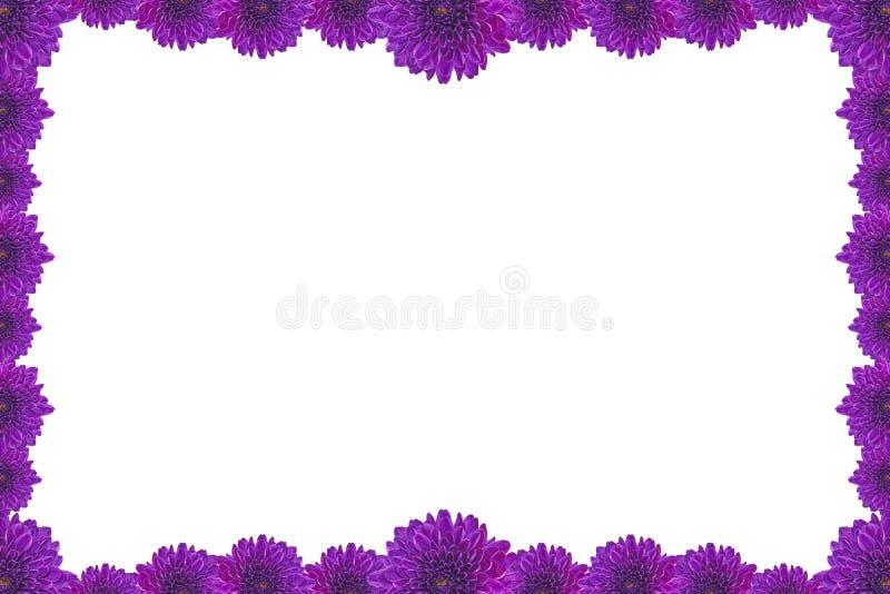 Blumen Bilderrahmen purpurroter blumen bilderrahmen lokalisiert auf weißem hintergrund