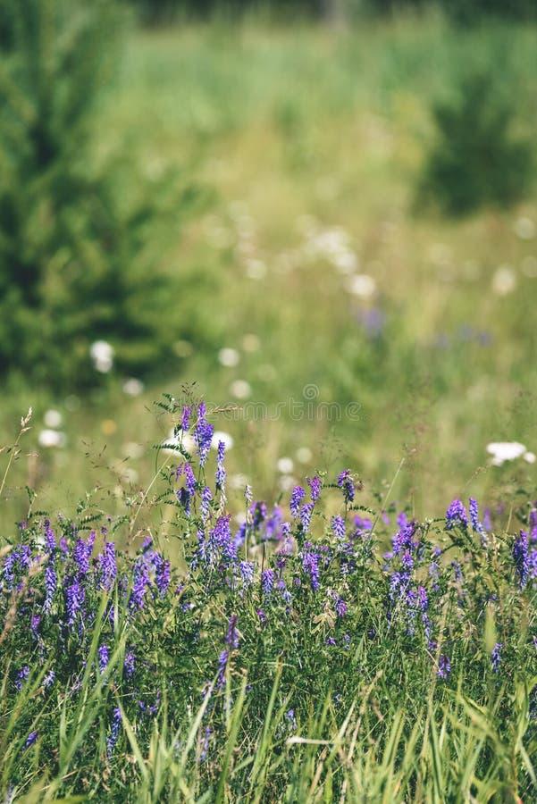 purpurroter Frühling blüht auf grünem Hintergrund - Weinlesepastellcol. stockbilder
