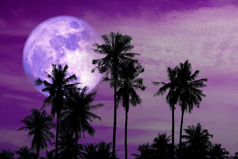 purpurroter Mond der vollen Ernte auf Himmel- und SchattenbildkokosnussPalmen stockbild
