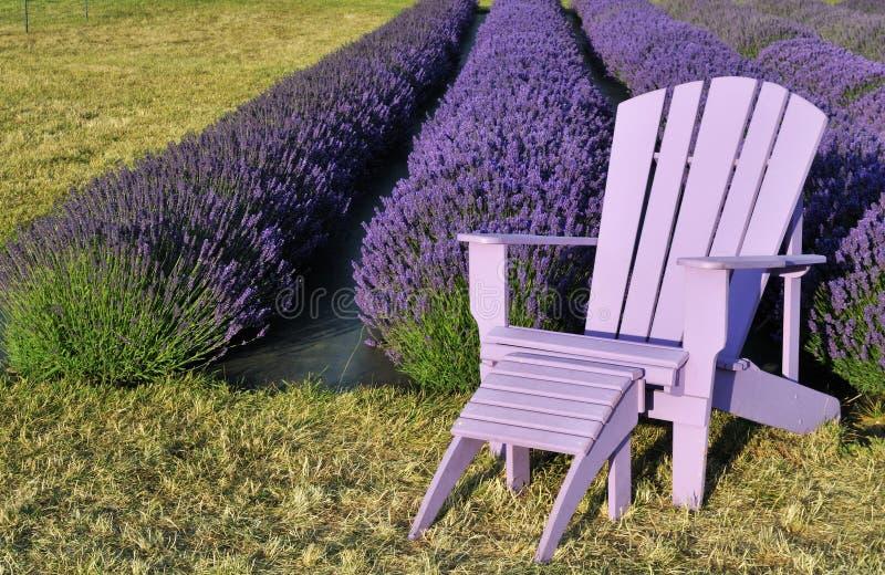 Purpurroter Rasenstuhl auf dem Lavendelgebiet lizenzfreie stockbilder