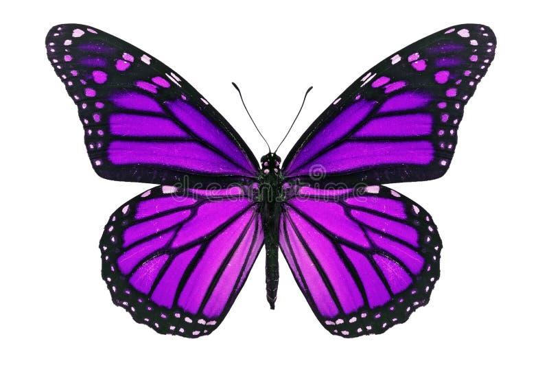 Purpurroter Schmetterling stockbilder