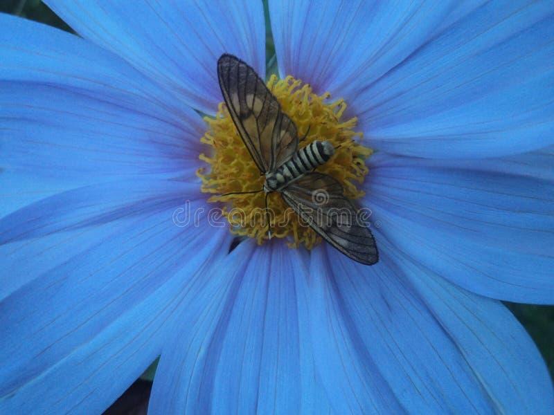 Purpurroter Schmetterling lizenzfreies stockfoto