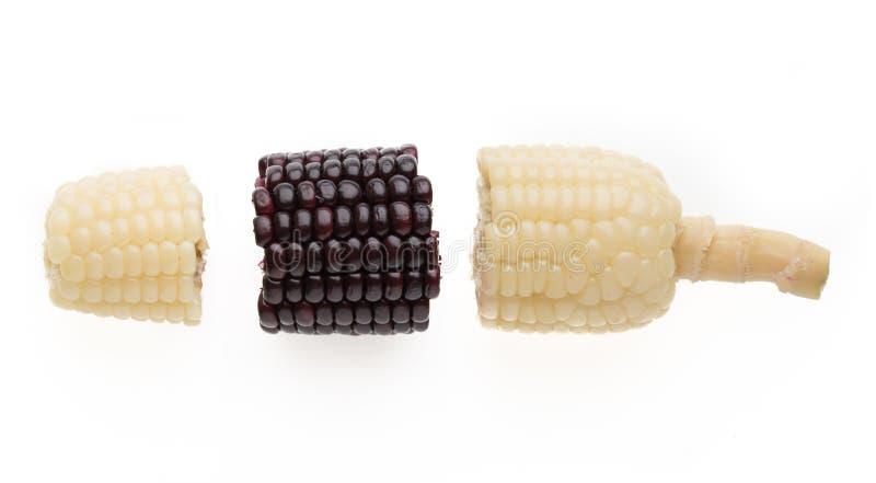 purpurroter und weißer Maisstückmähdrescher zusammen lokalisiert auf weißem b lizenzfreie stockbilder