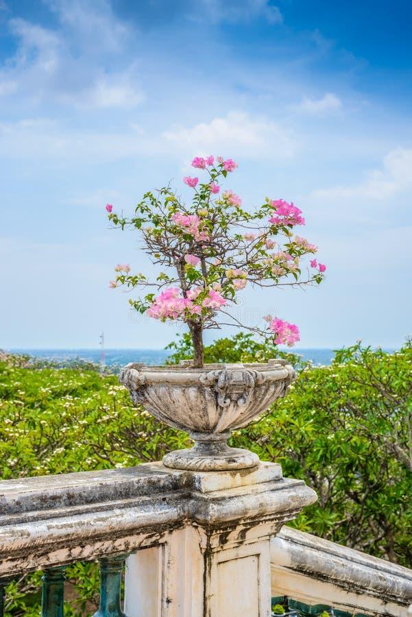 Purpurrotes Bouganvilla im Weinlesezement-Blumentopf stockfotografie