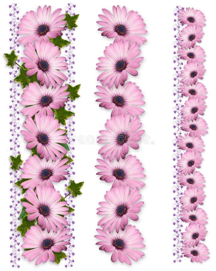 Purpurrotes Gänseblümchen fasst 3 Arten ein vektor abbildung