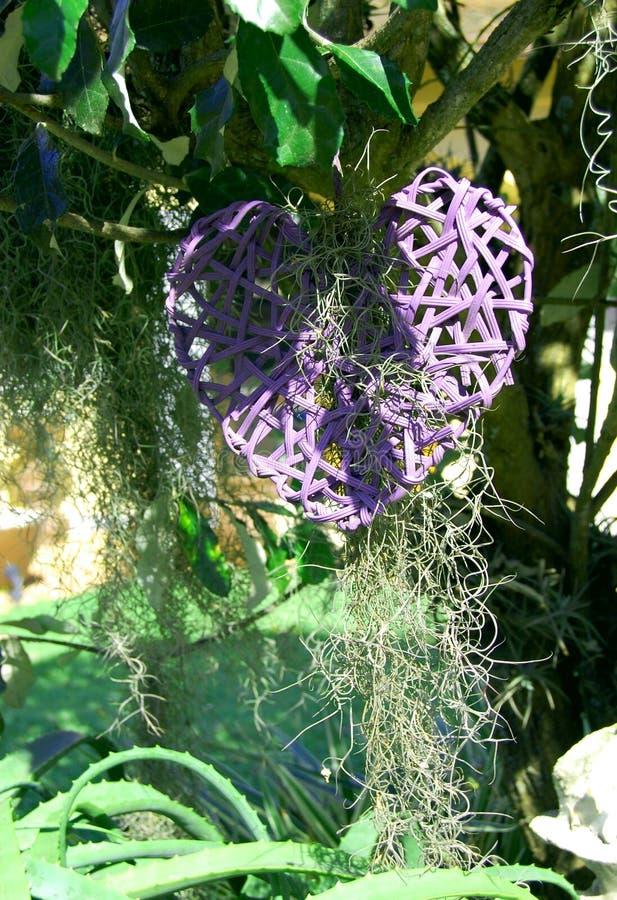 Purpurrotes Herz in einem Baum stockbilder