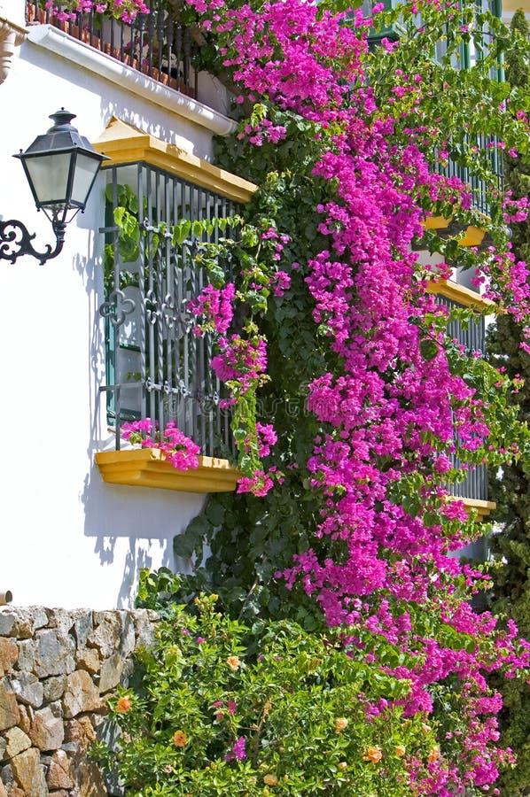 Purpurrotes oder rosafarbenes bouganvilla auf Seite des Hauses stockfotografie