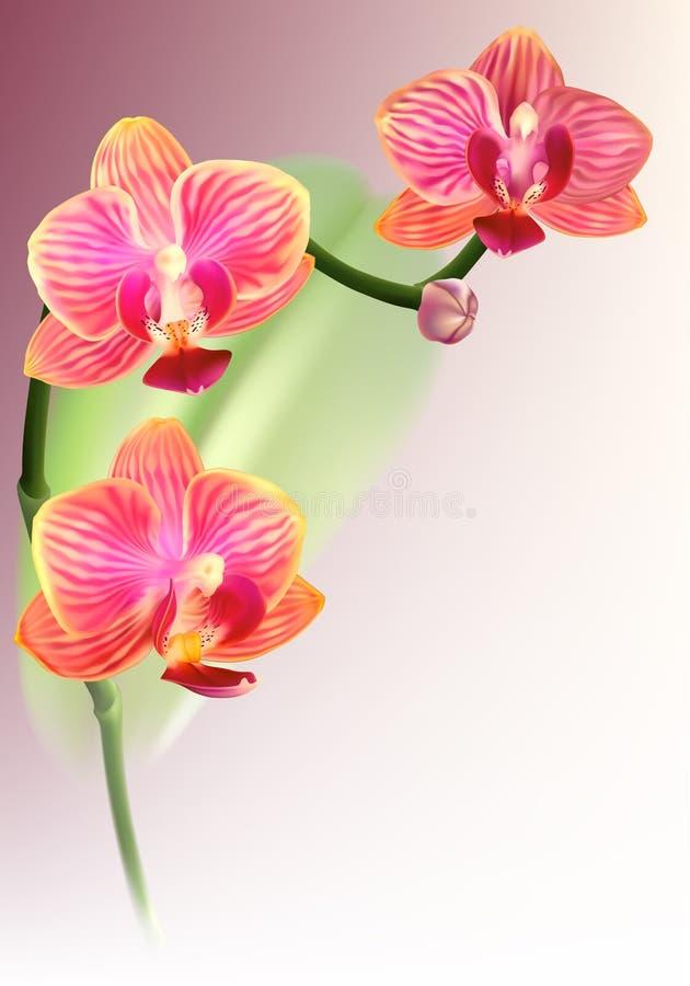 purpurt realistiskt för blommaorchid vektor illustrationer