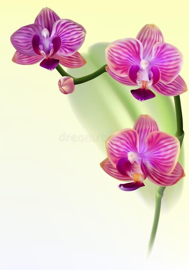 purpurt realistiskt för blommaorchid stock illustrationer