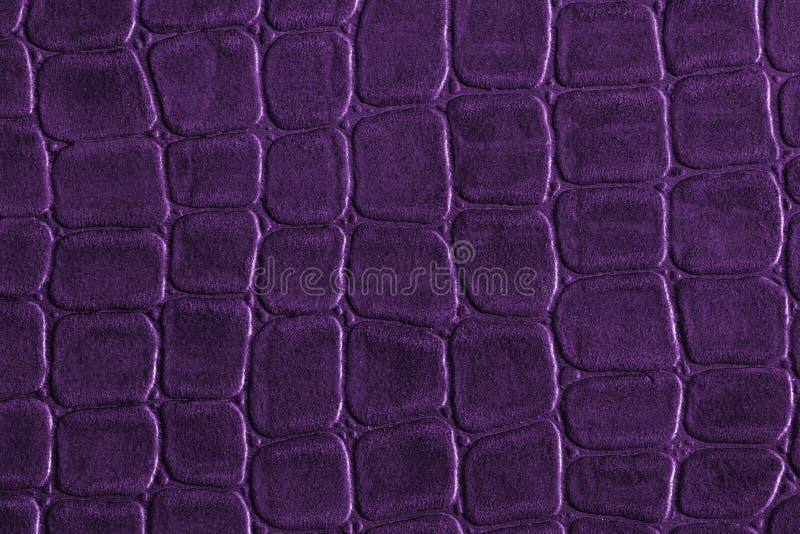 purpury zdjęcia royalty free