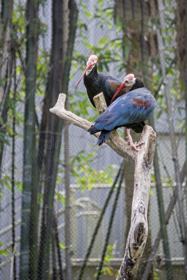Purpury bagna karmazynki Patrzeje Z lewej strony fotografia royalty free