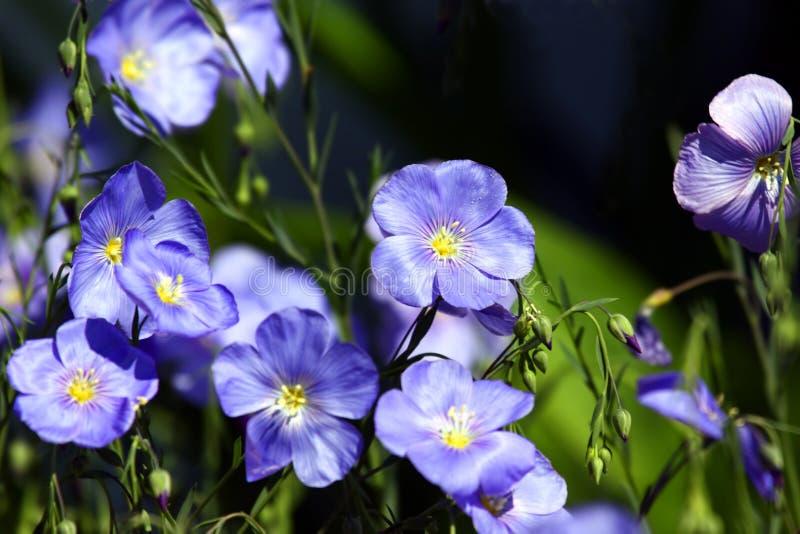 Purpury i zieleń obrazy royalty free