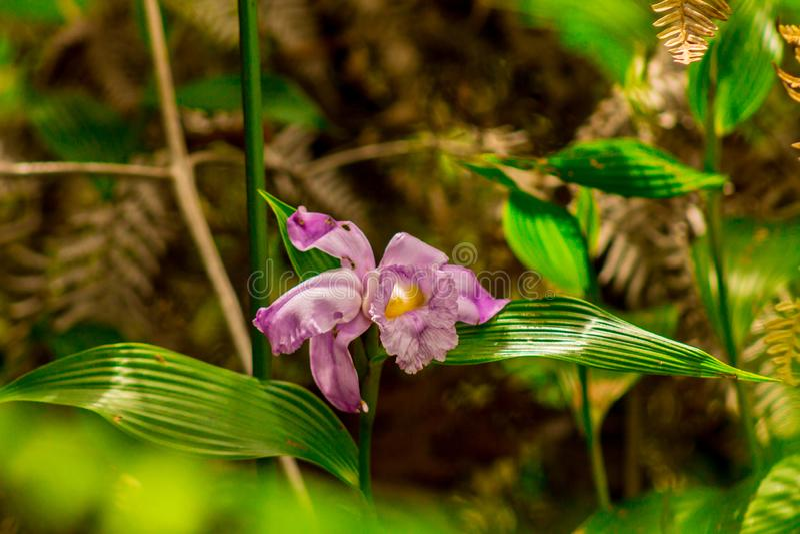 Purpury kwitną w lesie zdjęcie stock