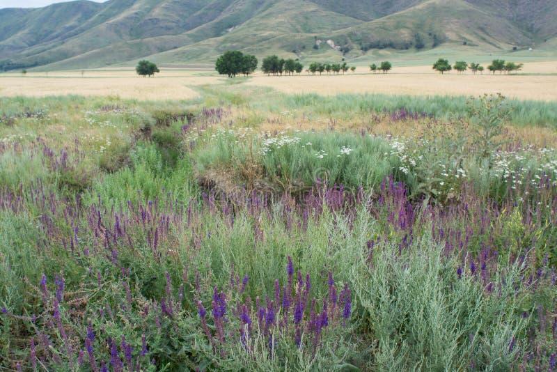 Purpury zasadzają na tle góra Makro- strzelanina Natura zdjęcie royalty free