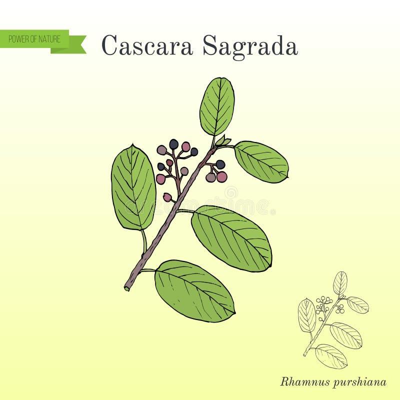 Purshiana del Rhamnus de Cascara Sagrada, o corteza persa, planta medicinal stock de ilustración
