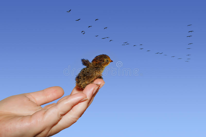 Download In A Pursuit Of Dream Stock Photography - Image: 19113682