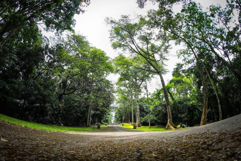 Purwodadi botanisk trädgård, Pasuruan, Indonesien royaltyfria bilder