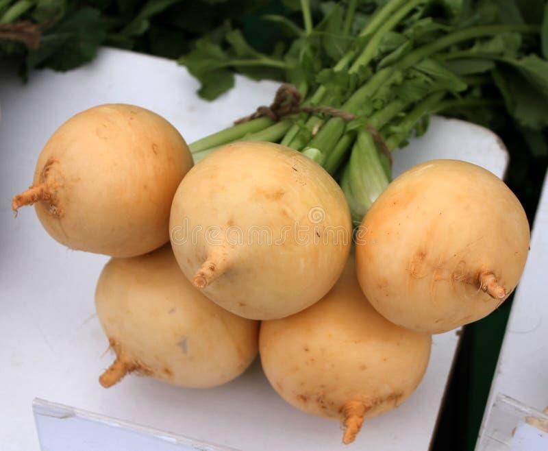 Pusa Swarnima Turnip stock images
