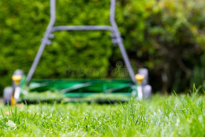 Reel mower blurred in background with grass in focus. Push mower on the lawn from ground perspective stock photo