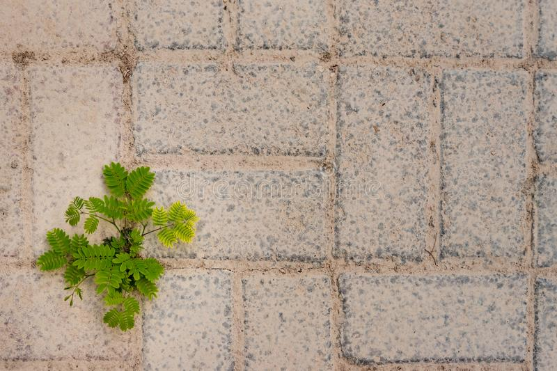 Push through your limits!. A young tree sprouts from the concrete brick floor, showing how resilient nature can be even in the hardest conditions stock photography