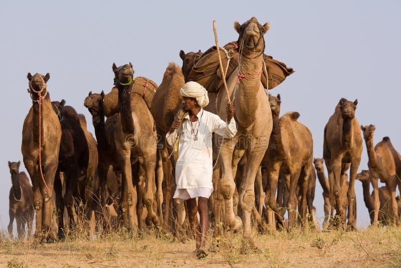 Pushkar angemessenes (Pushkar-Kamel Mela) Rajasthan, Indien stockfotografie