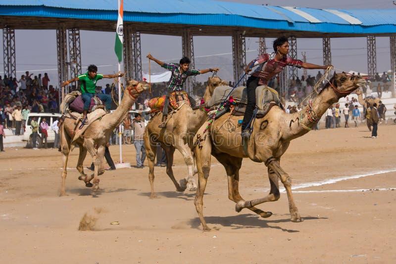Pushkar angemessenes (Pushkar-Kamel Mela) Rajasthan, Indien stockfoto
