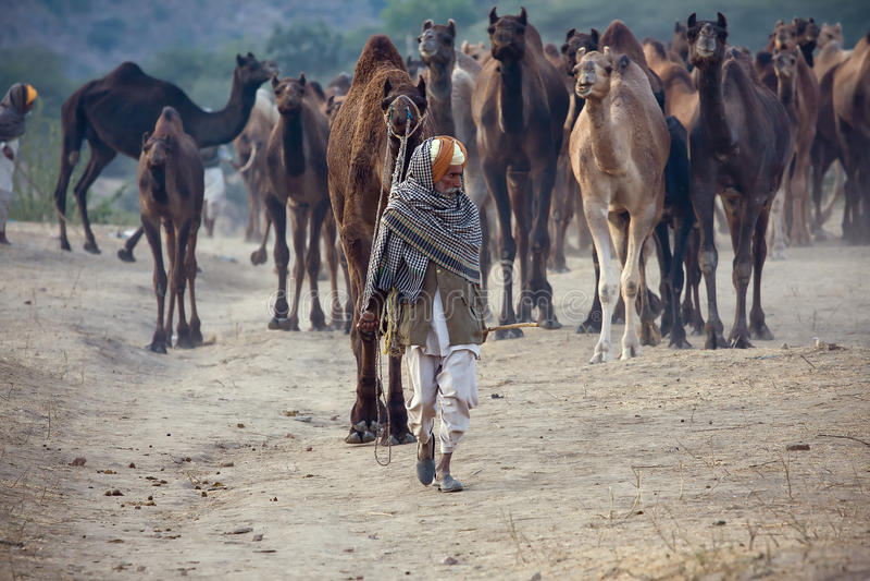 Pushkar angemessenes (Pushkar-Kamel Mela) Rajasthan, Indien stockbilder