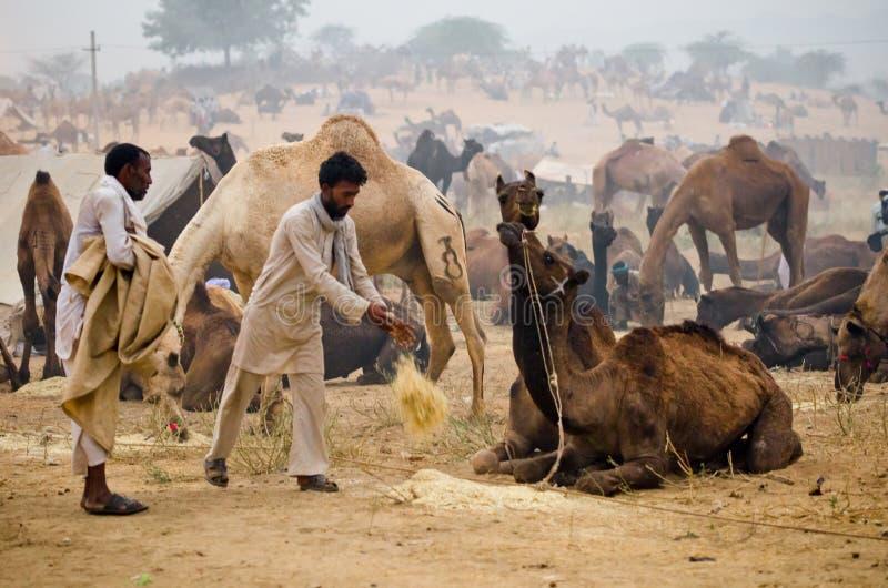 Pushkar Camel Fair, Rajasthan, India royalty free stock photo