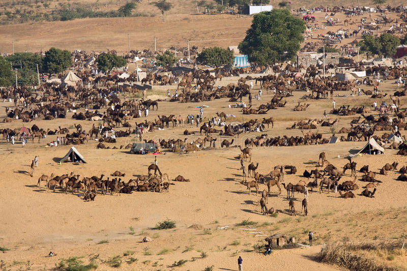 Download Pushkar Camel Mela ( Pushkar Camel Fair ) Editorial Stock Image - Image: 33468979