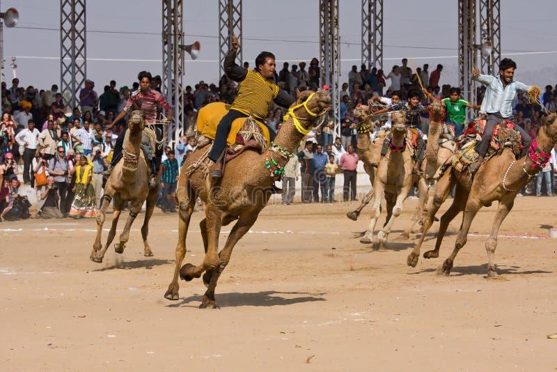 PUSHKAR, INDIEN - 21. NOVEMBER: Pushkar-Kamel Mela (Pushkar-Kamel angemessen) am 21. November 2012 in Pushkar, Rajasthan, Indien.  lizenzfreie stockfotografie