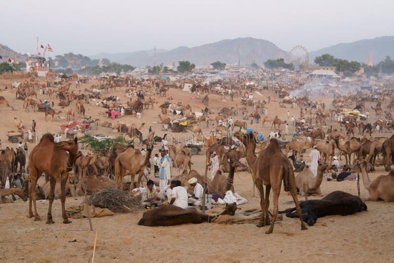 pushkar kamel fair royaltyfri fotografi