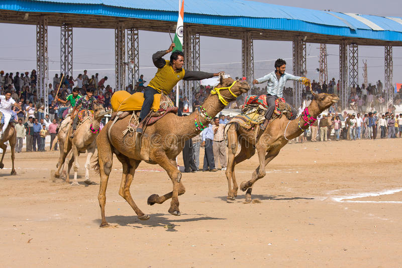 Pushkar Kamel Mela (Pushkar Kamel angemessen) stockfotografie