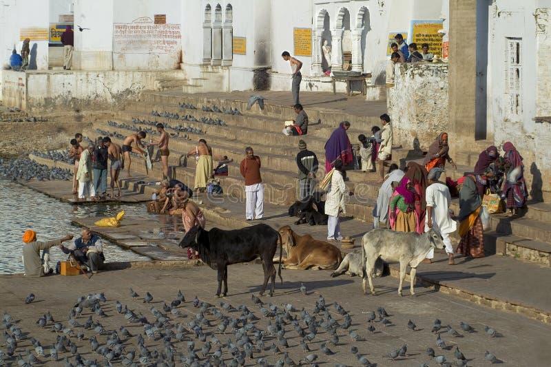 Pushkar See lizenzfreie stockfotos