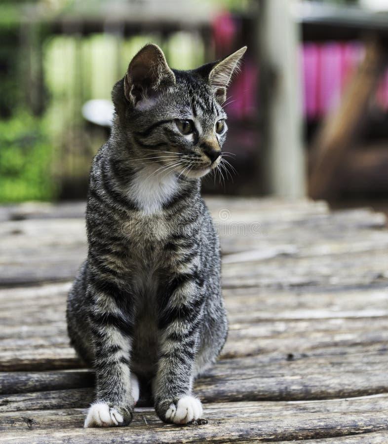 Puss или кот сидя на деревянной плите стоковое фото