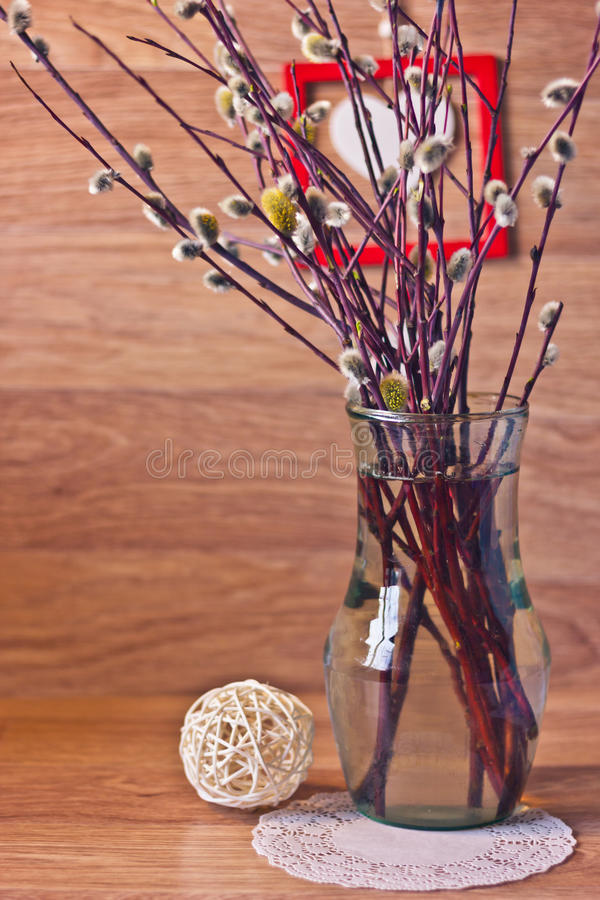 Download Pussy-Weide im Vase stockfoto. Bild von zweig, belichtet - 90226510