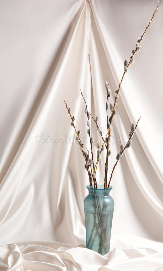 Download Willow stock photo. Image of studio, gray, color, tree - 19213384