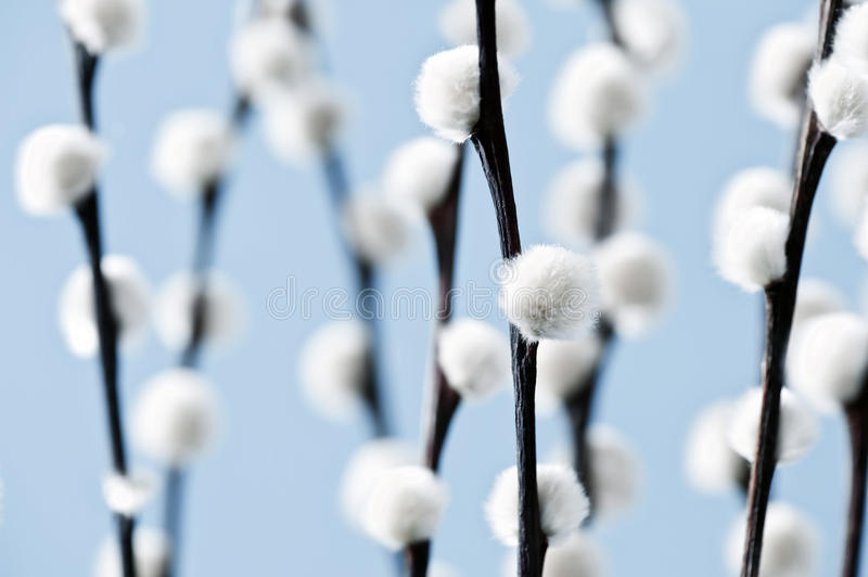 Download Willow stock photo. Image of winter, brown, flourishing - 34801712