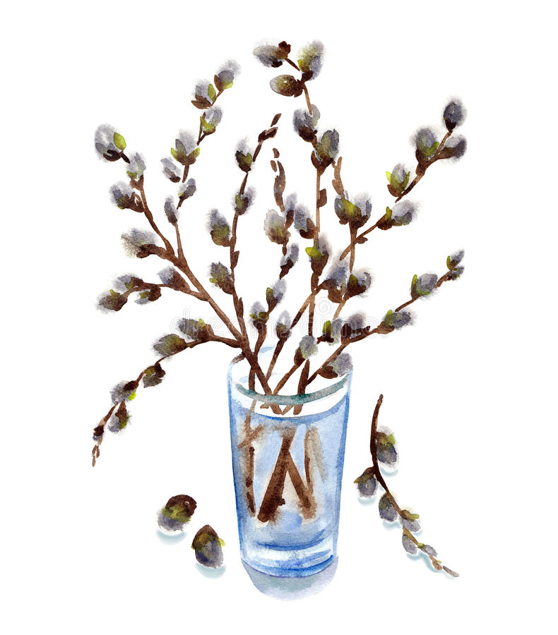 dried-pussy-willow-branches-for-sale-teen-gays-very