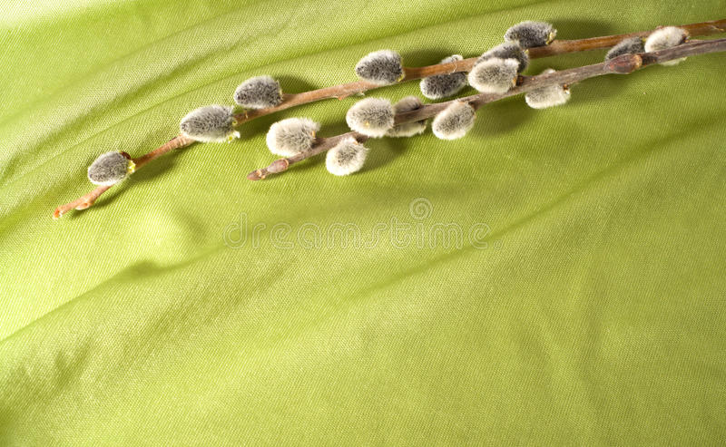 Pussy-willow stock photos