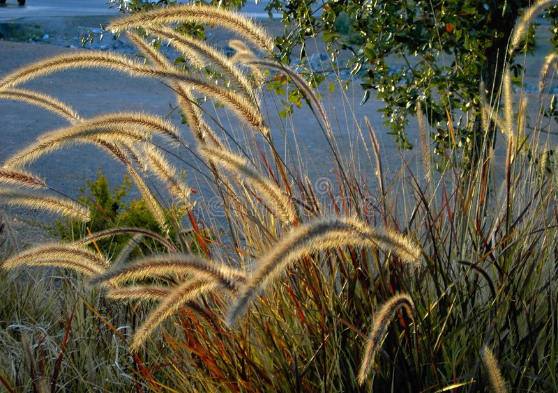 Download Willow plants stock photo. Image of browns, foliage, fall - 389682